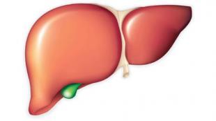 مشروبات طبيعية تعزز عمل الكبد دون الحاجة للأدوية